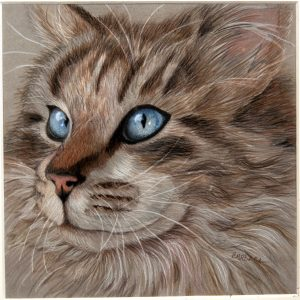 """Blue-Eyed Cat,"" a drawing by Barbara Stanfield"